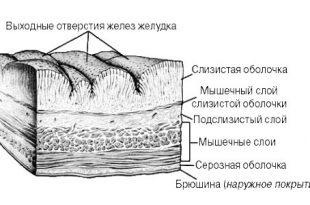 stenka-zeludka