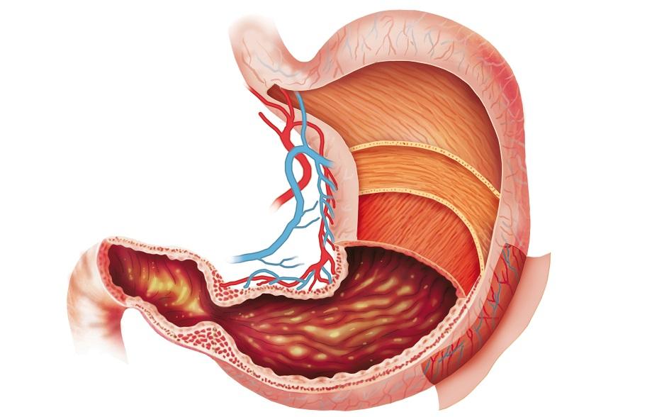 картинки желудок человека прикольные